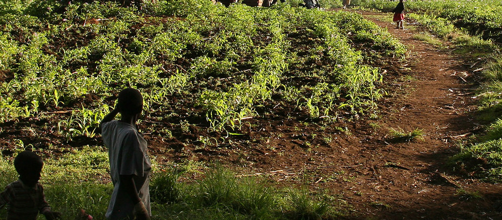 Kilimanjaro Climate Cultivation zone