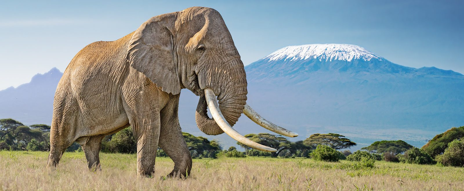 Kilimanjaro view from Amboseli National Park Kenya
